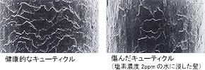 健康な髪と塩素に漬けた髪のキューティクルの比較