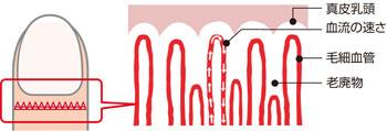 指の毛細血管