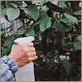 実践!「素粒水」でMy竹酢液を作ろう。老木が病気に…